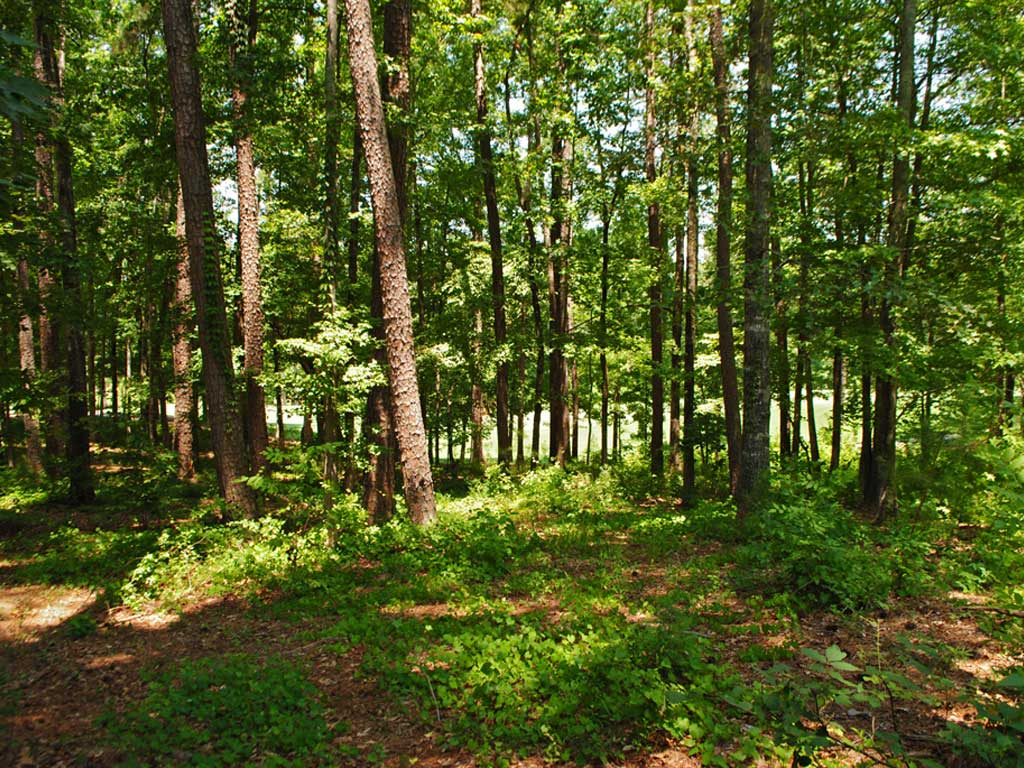 1021 Branson Bluff Golf Homesite Lake Oconee Ga Real