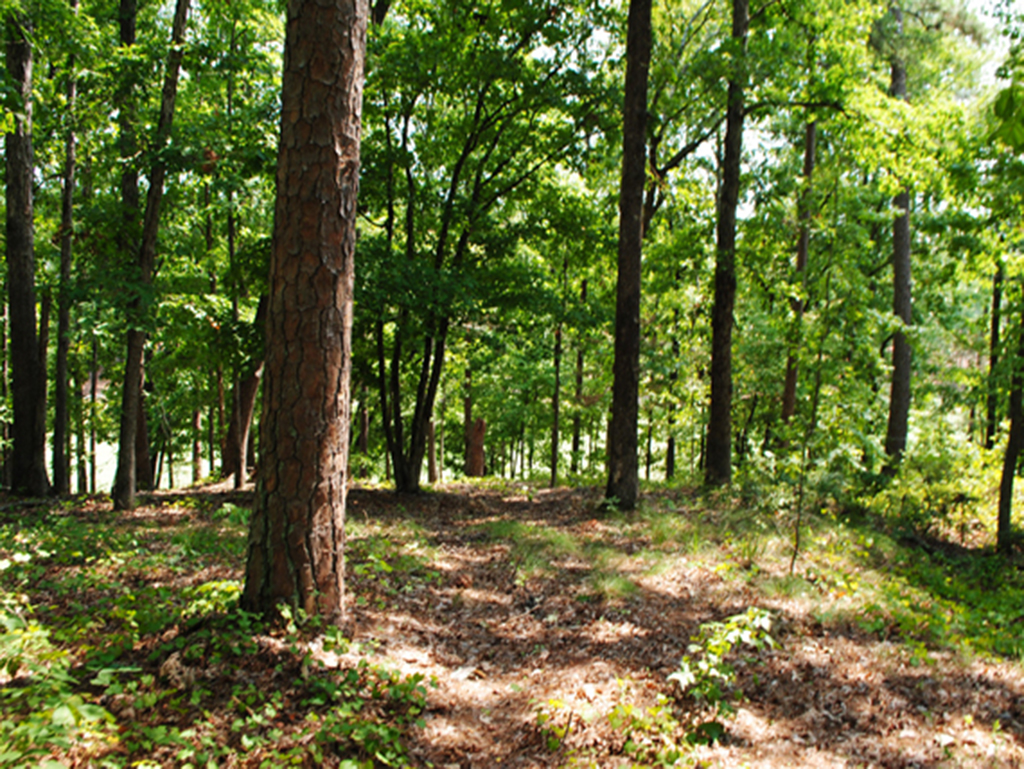 1071 Shoulder Bone Circle Golf Homesite Lake Oconee